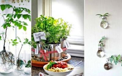 Mini giardini da interni: la nuova frontiera del giardinaggio domestico