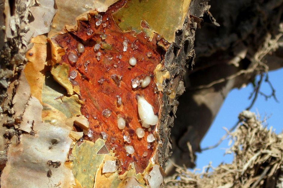 Photo of Incenso: gli usi e le proprietà di questa resina usata non solo per profumare