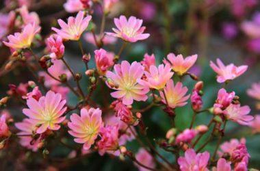Piante resistenti al freddo: le 5 piante che resistono meglio in inverno