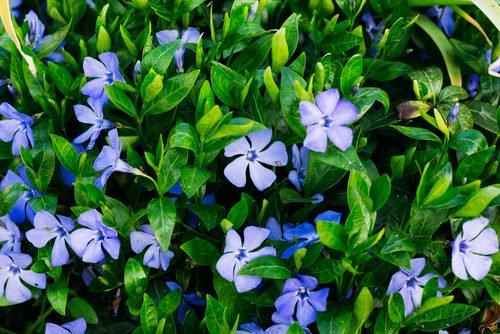 Piante resistenti al freddo le 5 piante pi forti in for Cespugli fioriti perenni resistenti al freddo