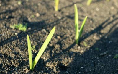 I lavori dell'orto di aprile: cosa seminare, raccogliere e potare