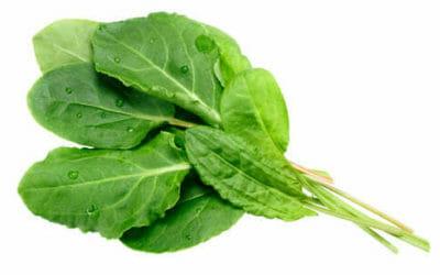 Acetosa: cos'è, proprietà e come utilizzarla in cucina