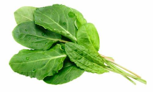 Photo of Acetosa: cos'è, proprietà e come utilizzarla in cucina