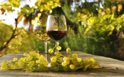 Italiani sempre più pazzi per il vino bio: raddoppiati i consumi