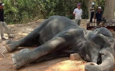 Animali morti per i turisti: storia di Sambo, morto di infarto per trasportarli