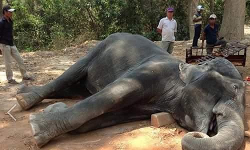 Photo of Animali morti per i turisti: storia di Sambo, morto di infarto per trasportarli
