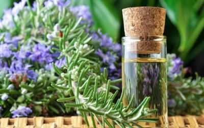 Olio essenziale di rosmarino: proprietà e utilizzi
