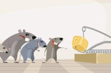 Tutti i trucchi per allontanare i topi in modo naturale e senza ucciderli
