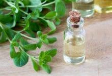 Photo of Quello che c'è da sapere sulla maggiorana, un'erba aromatica dalle molteplici proprietà