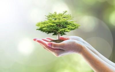 5 prodotti riciclati dai rifiuti organici