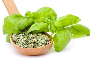 Basilico: i segreti di una pianta aromatica molto diffusa e apprezzata