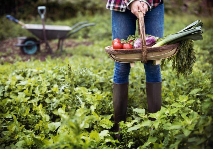 Lavori dell'orto di maggio