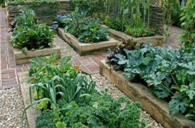 I lavori dell'orto di maggio: cosa seminare, raccogliere e potare