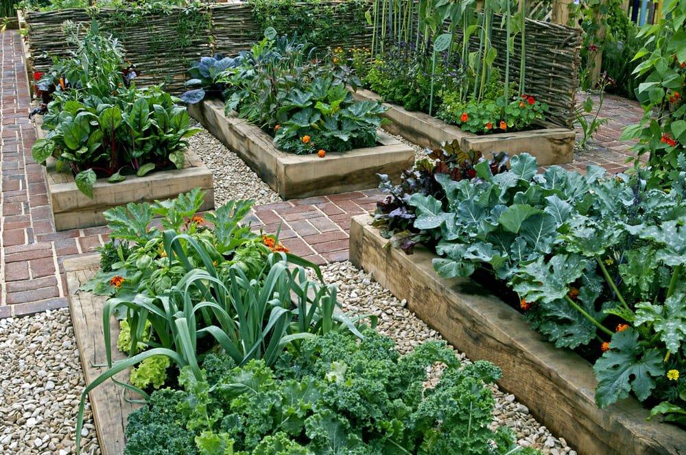 Photo of I lavori dell'orto di maggio: cosa seminare, raccogliere e potare