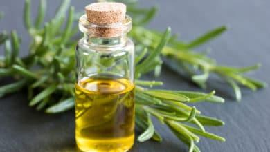 Photo of L'olio essenziale di rosmarino, apprezzato per le sue proprietà cosmetiche, depurative e rilassanti
