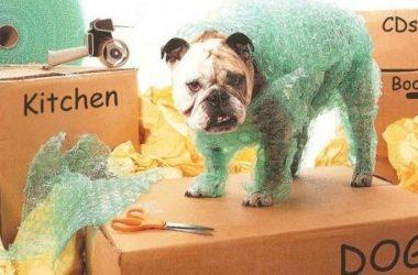 Come traslocare con gli animali domestici: idee e consigli