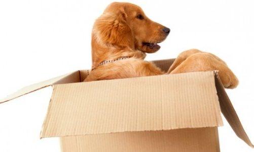 Photo of Come traslocare con gli animali domestici: idee e consigli