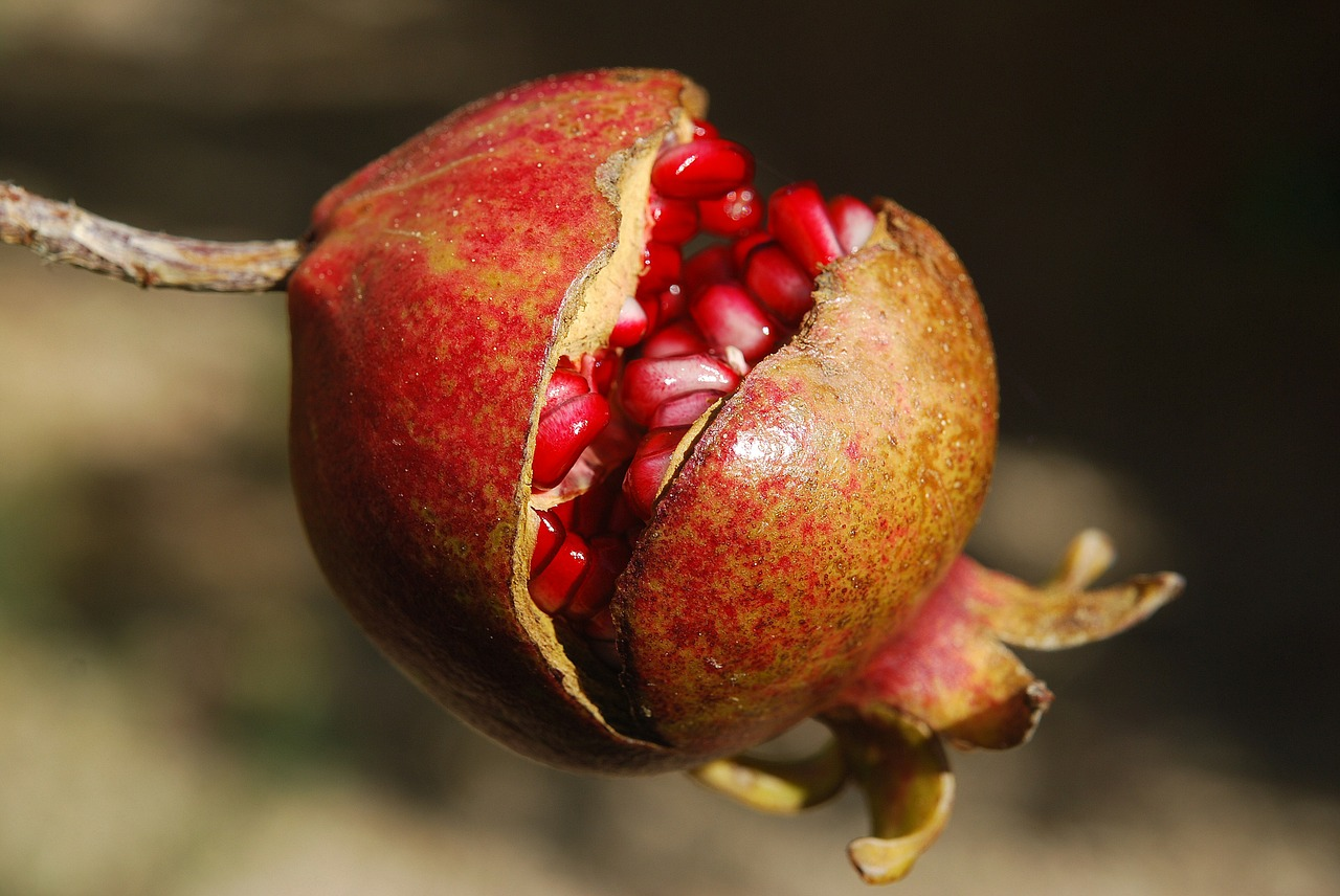 pomegranate-185456_1280
