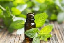 Photo of L'olio essenziale di menta, un utile antibatterico e antistress