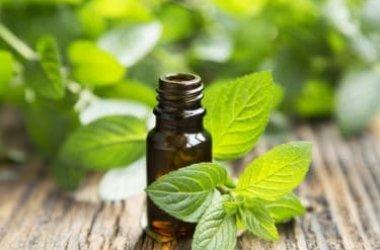 L'olio essenziale di menta, un utile antibatterico e antistress