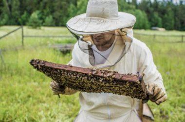 Scopriamo come allontanare le api in modo naturale e senza farle del male