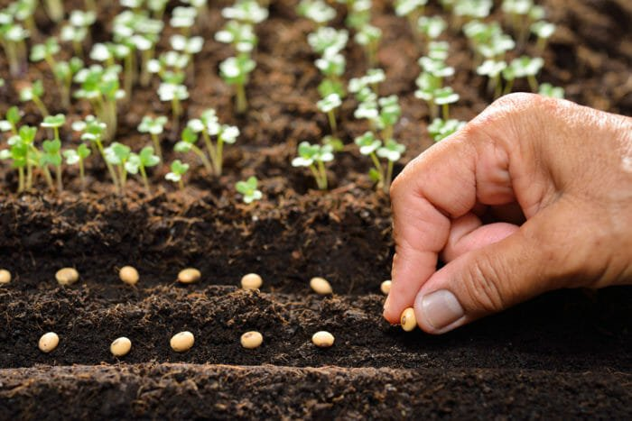 Lavori dell'orto mese per mes