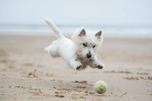 Cani in spiaggia