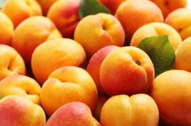 Albicocca: proprietà, utilizzi e ricette… non solo dolci