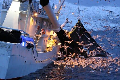 tonno in scatola fa male all'ecosistema marino