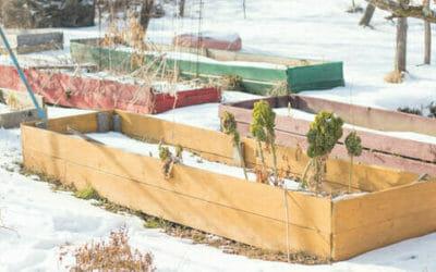 I lavori dell'orto di febbraio: cosa seminare, raccogliere e potare