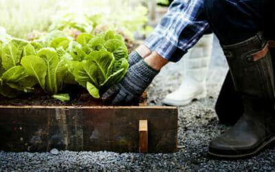 Lavori dell'orto mese per mese: cosa seminare, come potare, cosa raccogliere, anche il frutteto e le erbe aromatiche