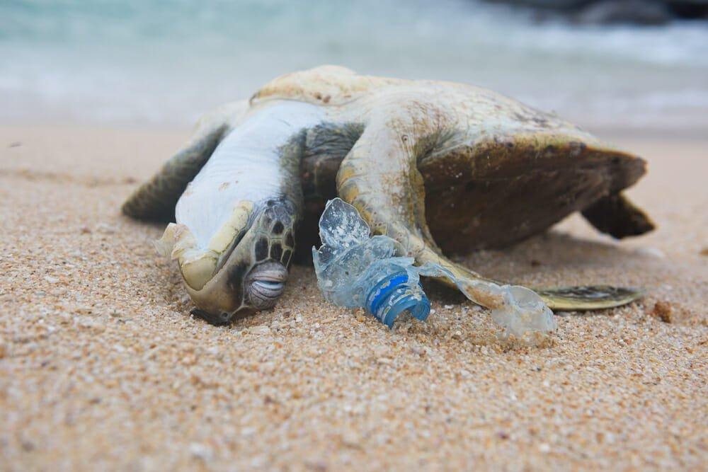 Photo of Plastica nei mari: i dati di un fenomeno presto fuori controllo