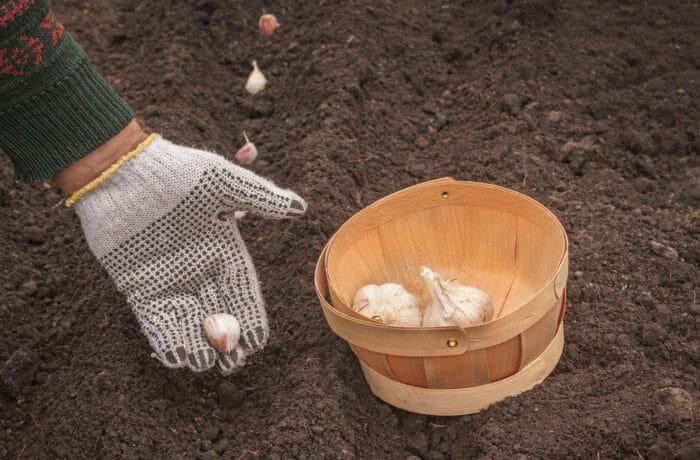 Lavori dell'orto di marzo