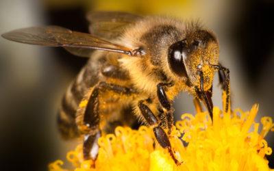 Puntura di vespa: rimedi e cure naturali