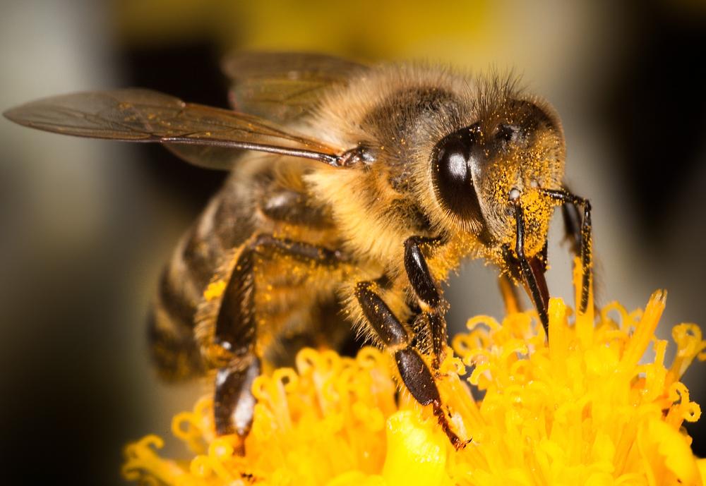 Come comportarsi dopo una puntura di vespa e quali sono i ...