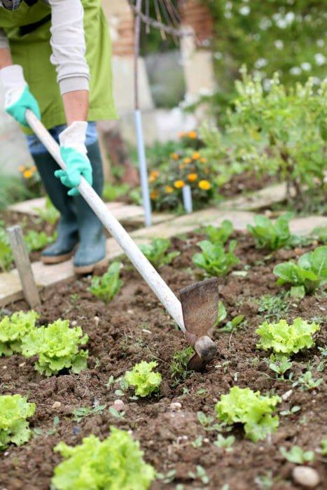 lavori dell'orto di settembre