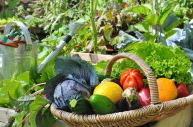 I lavori dell'orto di luglio: cosa seminare, raccogliere e potare