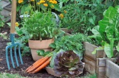 I lavori dell'orto di agosto: cosa seminare, raccogliere e potare