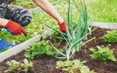 I lavori dell'orto di settembre: cosa seminare, raccogliere e potare