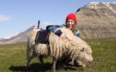 Sheep view, ovvero le isole Far Oer viste dalle pecore