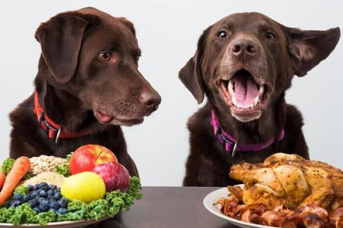 Photo of Alimentazione del cane: quali sono le basi? Come scegliere correttamente il cibo?