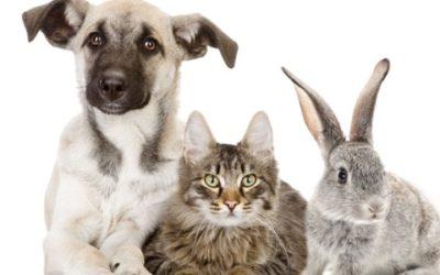 Animali domestici e nac nuovi animali domestici quello for Nuovi piani domestici