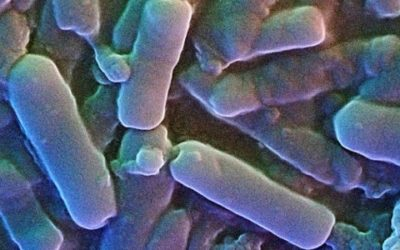 Clostridium Perfringens: cos'è e quali sono i sintomi
