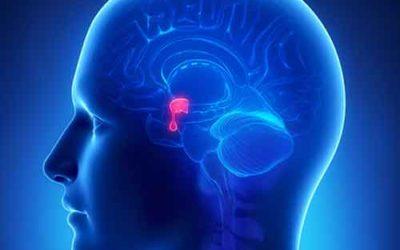 Cos'è e a cosa serve la melatonina, l'ormone che regola il sonno
