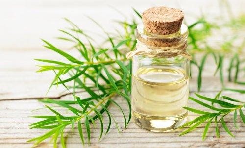 Photo of Tea tree oil: proprietà dell'olio di melaleuca