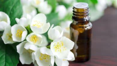 Photo of Olio essenziale di gelsomino, un olio prezioso e dai molteplici utilizzi