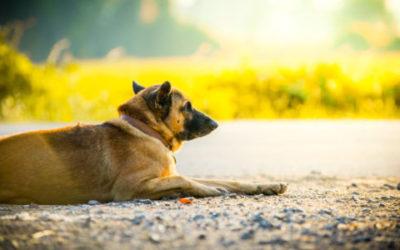 Non solo cani e gatti ma anche criceti e tartarughe abbandonati in estate