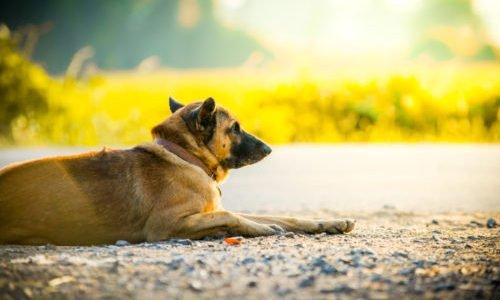 Photo of Non solo cani e gatti ma anche criceti e tartarughe abbandonati in estate