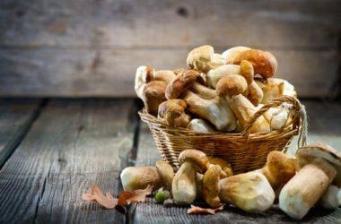 Una guida alla raccolta dei funghi, per neofiti e non