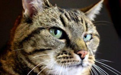 Gatto soriano: carattere, educazione e aspetto